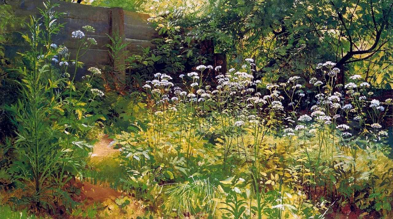 Хизер силк в лесу 1 фотография