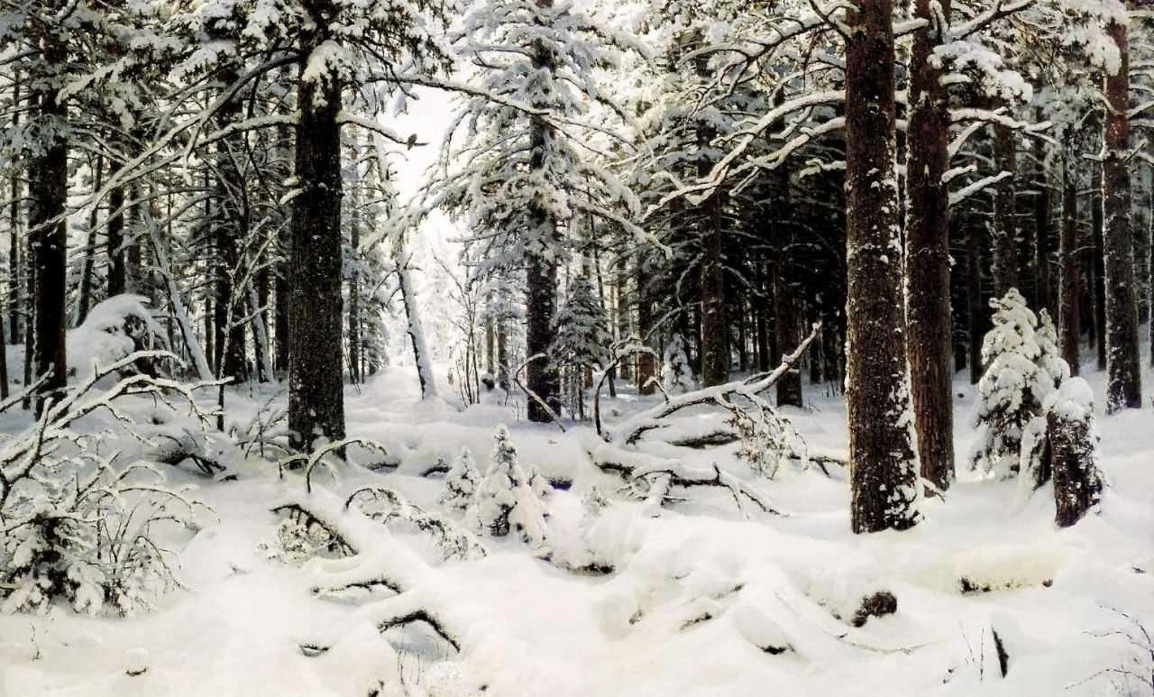 Хизер силк в лесу 10 фотография